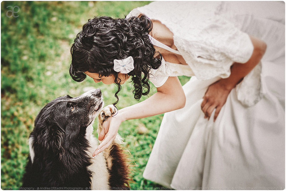 Lovely dog at wedding