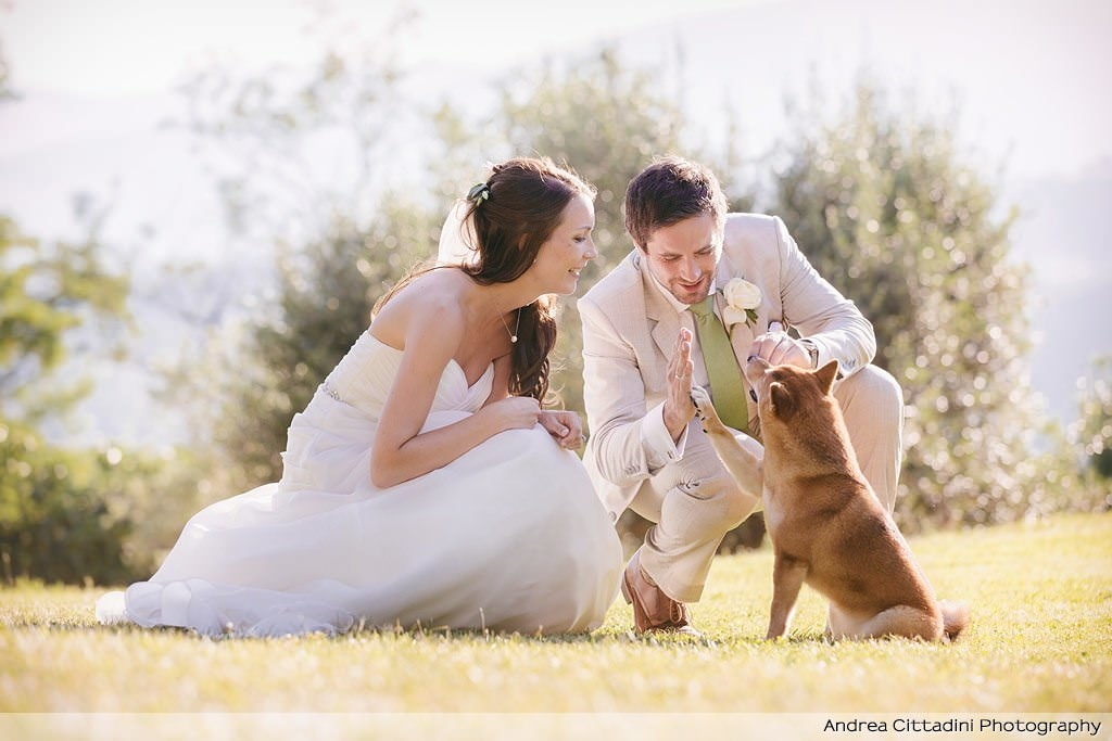 Dog High Five wedding